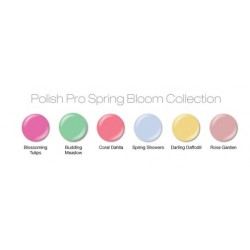 Collection Spring Bloom